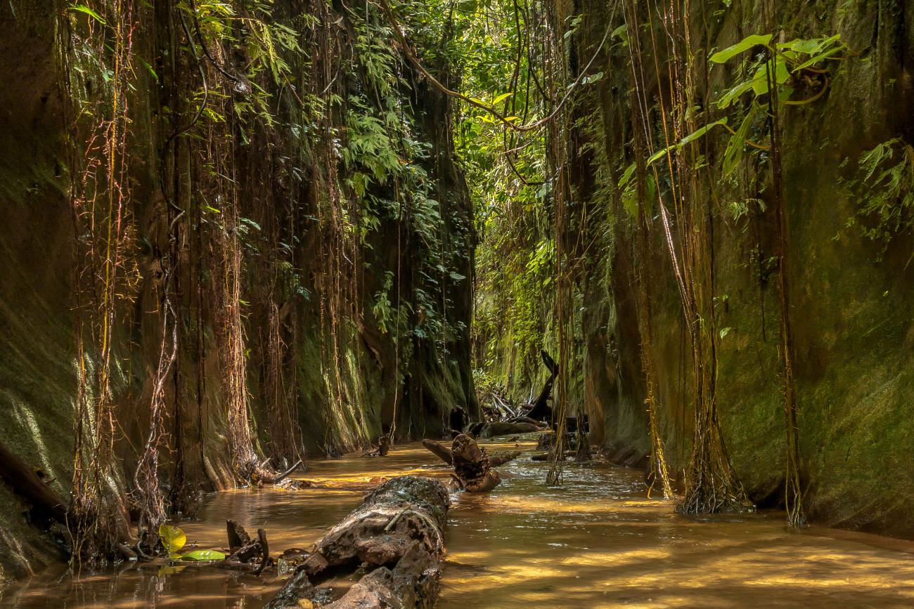 Reserva Natural ecoturistica las Dalias