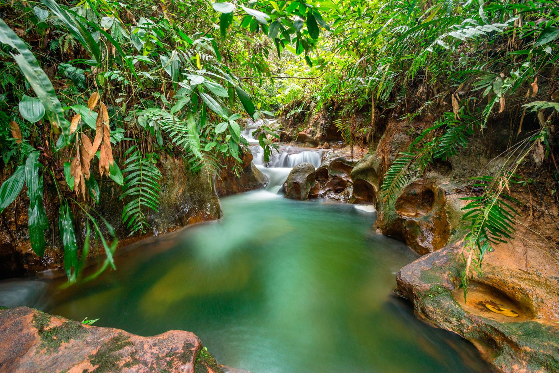 Parque ecol gico el para so de pedro portal de turismo for El paraiso de las alfombras